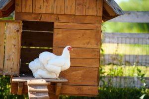 Stay AWAY from the Chicken Coops! — Fun with ICD–10